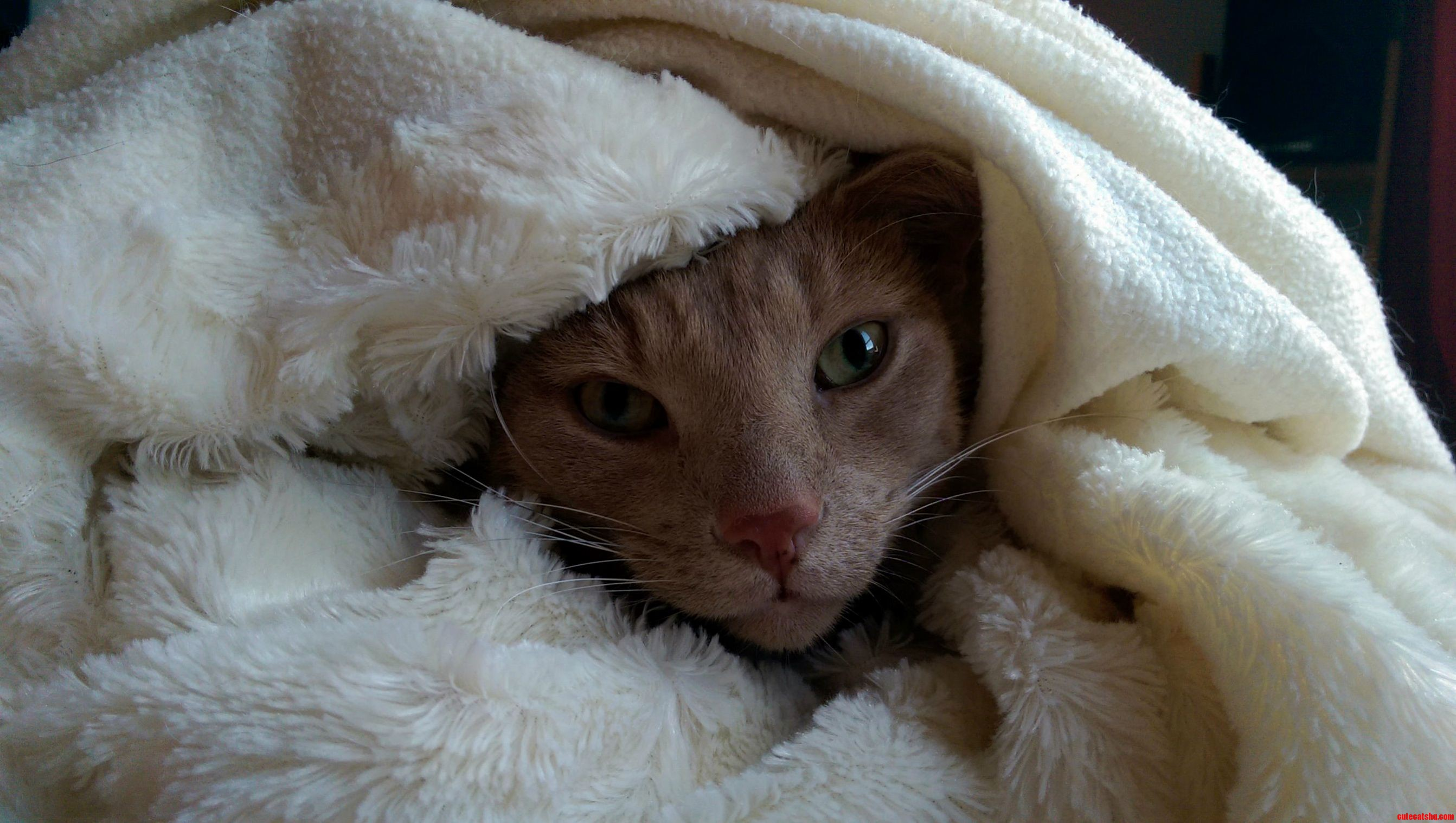 cute cat wrapped in blanket in a cosy home