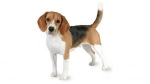 pet-friendly dog