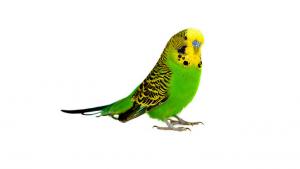 pet-friendly bird