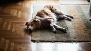 pet-friendly rug with a dog lay on it