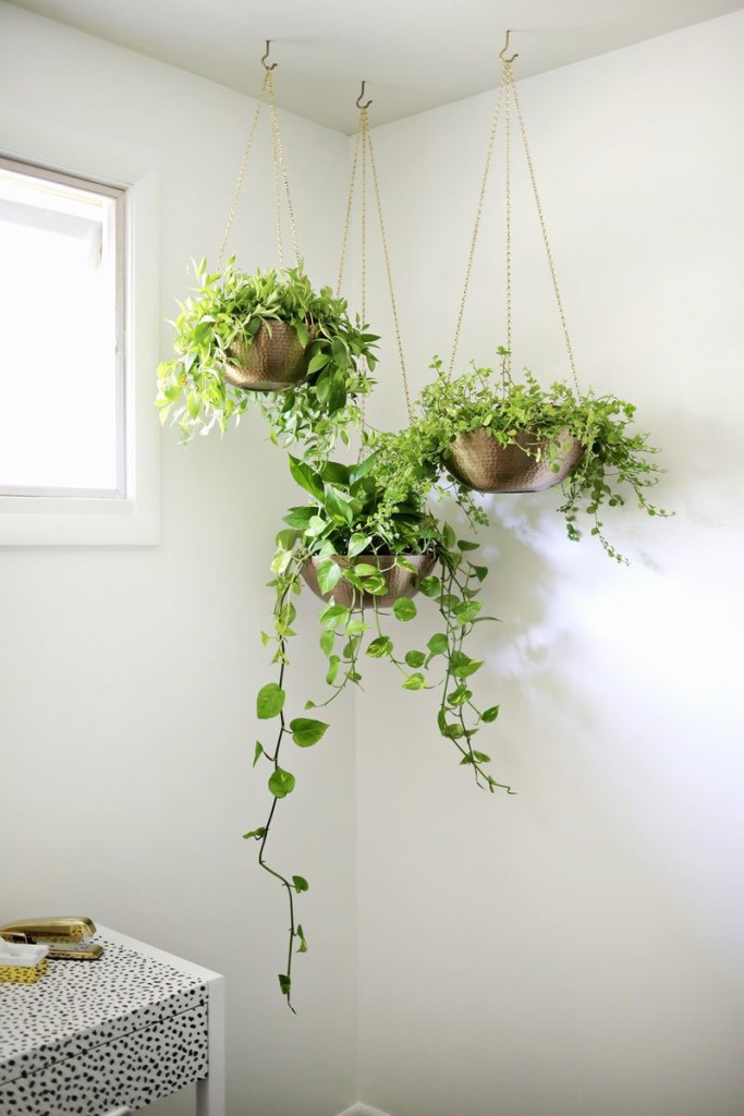 three wall indoor plants with hanging ivy over the sides of the plant pots