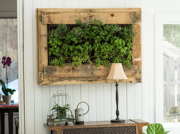 indoor plants green mixed herbs hanging on a pale board wall in a wooden pallet box