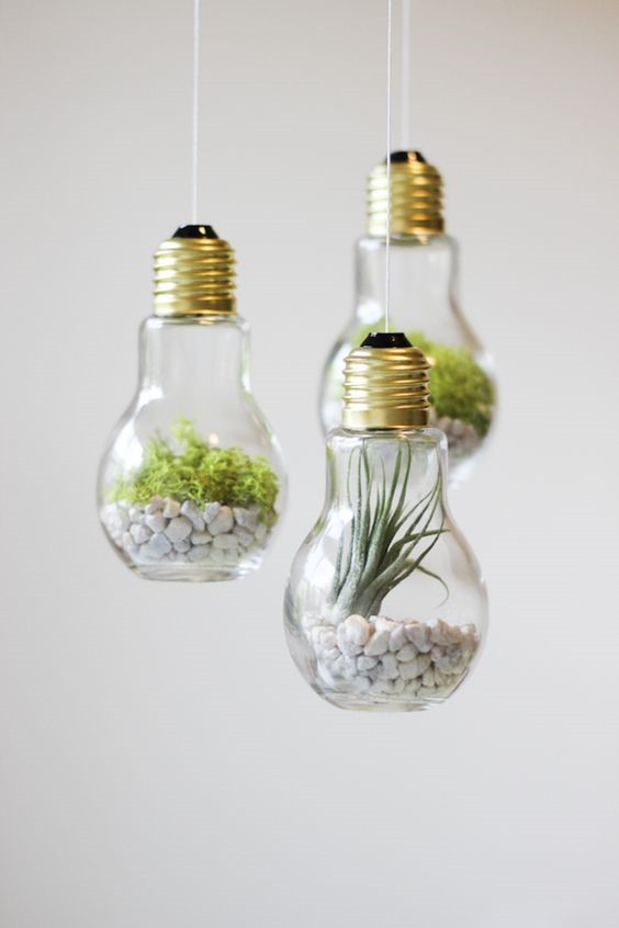 indoor plants lightbulb terrariums hanging from the ceiling with green air plants and white gravel in them