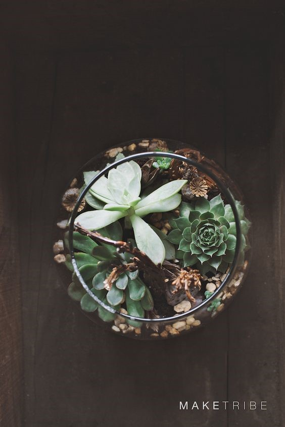 A glass bowl inddor plants terrarium filled with gravel and succulents on a dark wooden floor taken from above
