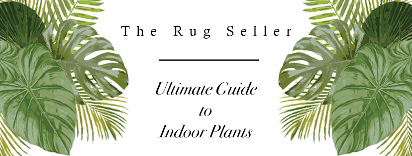 guide to indoor plants cover photo - the rug seller