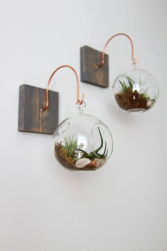 wall indoor plants terranium mounted on a wooden block on a pale grey wall with air plants inside