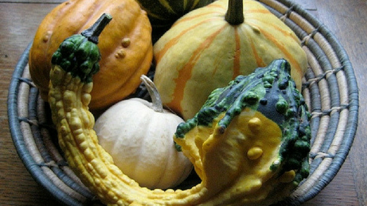 autumn decorations of multiple gourds in a wicker bowl on a brown table
