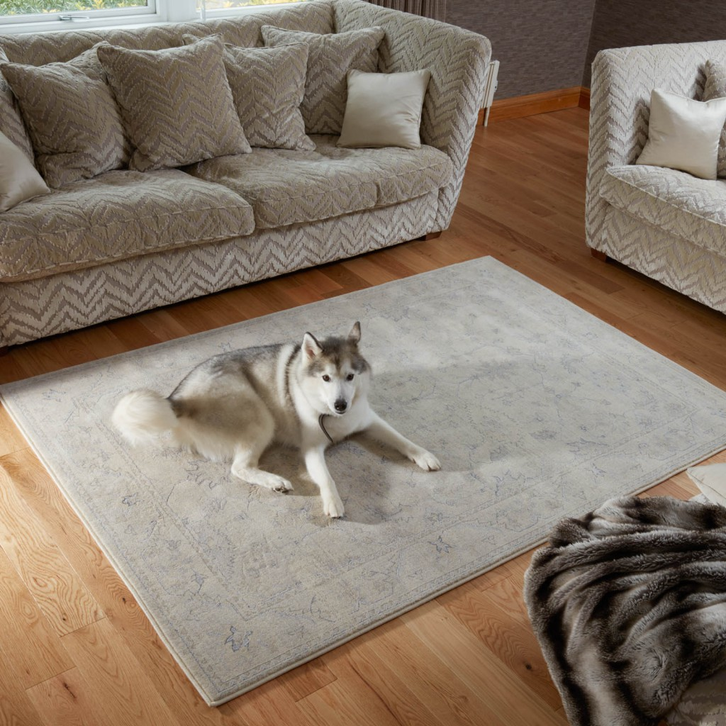plain living room with a dog sitting on a rug