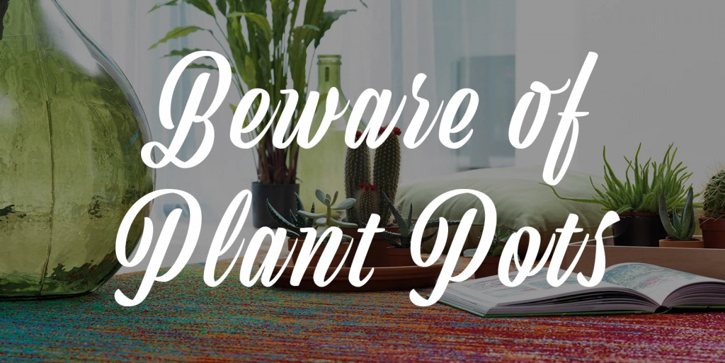 rug care guide banner beware of plant pots