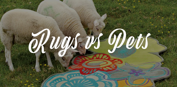 rug care guide banner rugs vs pets