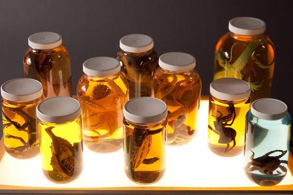 fake specimen jars replica halloween containing animals