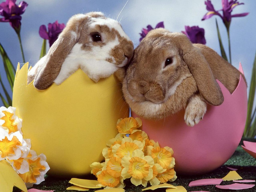 Bunnies in half open easster eggs with daffodils between them
