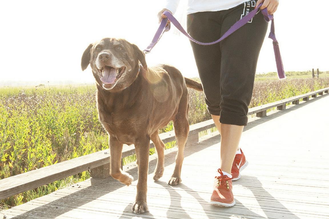 woman dog owner walking their dog hygge