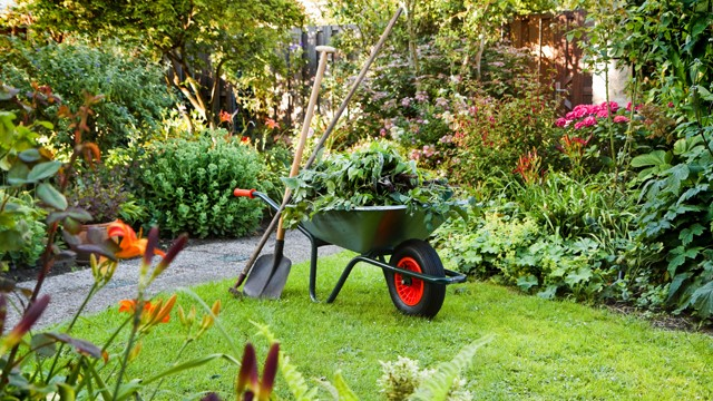 a green coloured garden filled with a huge amount of summer greenery ad a wheel barrow