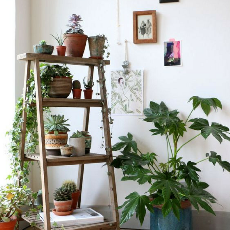 botanical for a student room