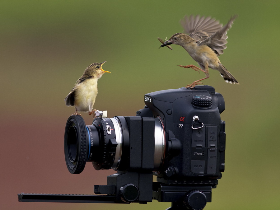 camera with birds on