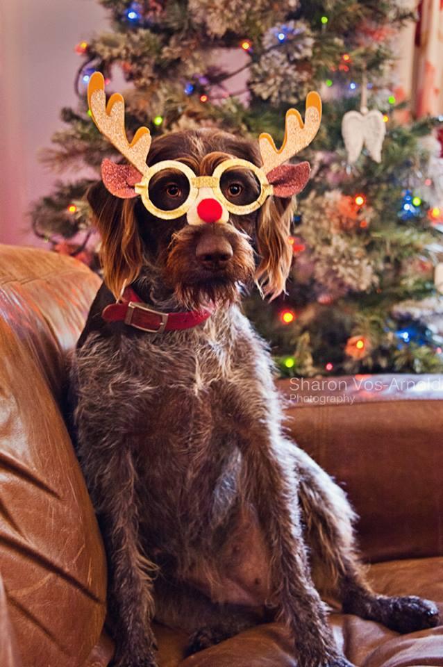 dog in an elf costume