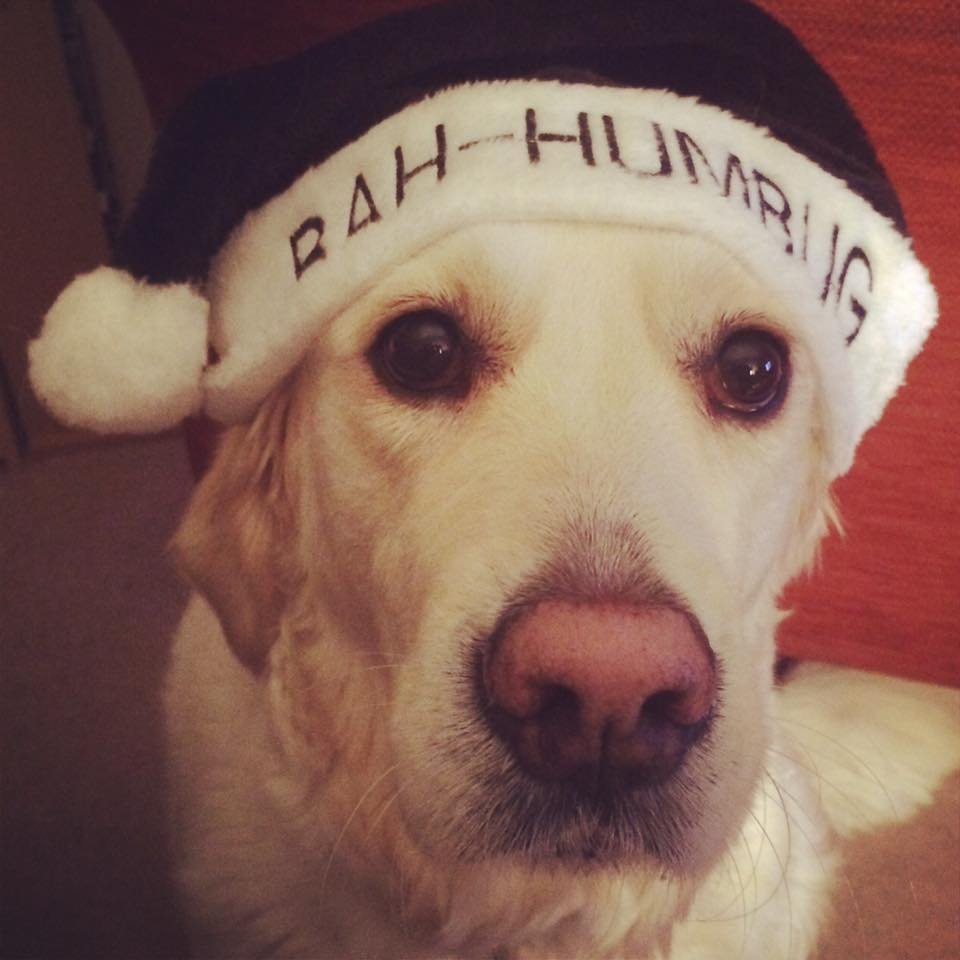 dog in a santa hat