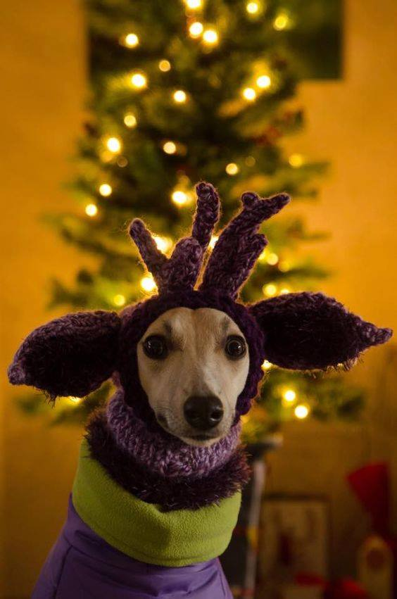 dog in christmas costume