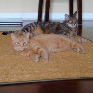 cute cats on a pet-friendly seagrass rug