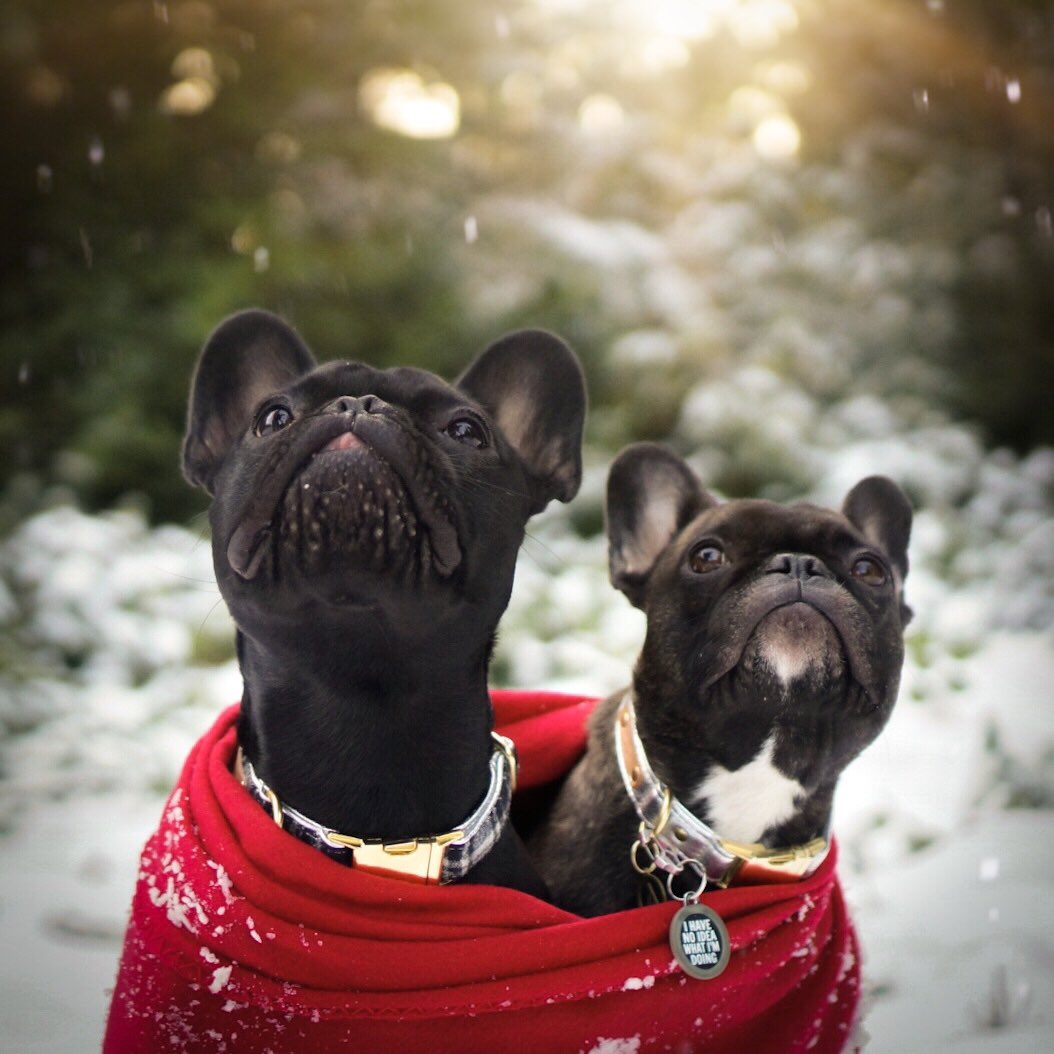 festive pets featured image