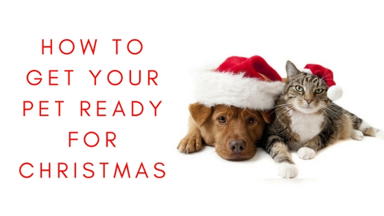 How To: Getting Your Pet Ready For Christmas graphic