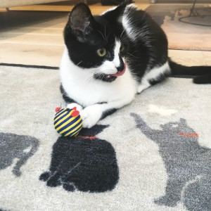 pet-friendly cat playing on a rug