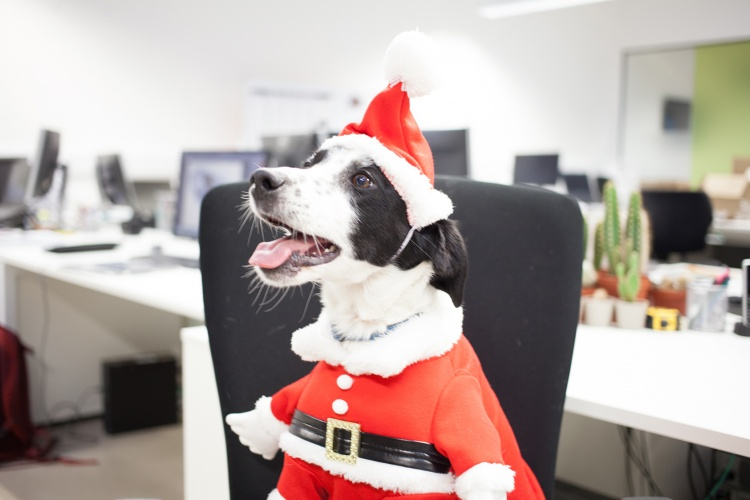 dog wearing a christmas costume