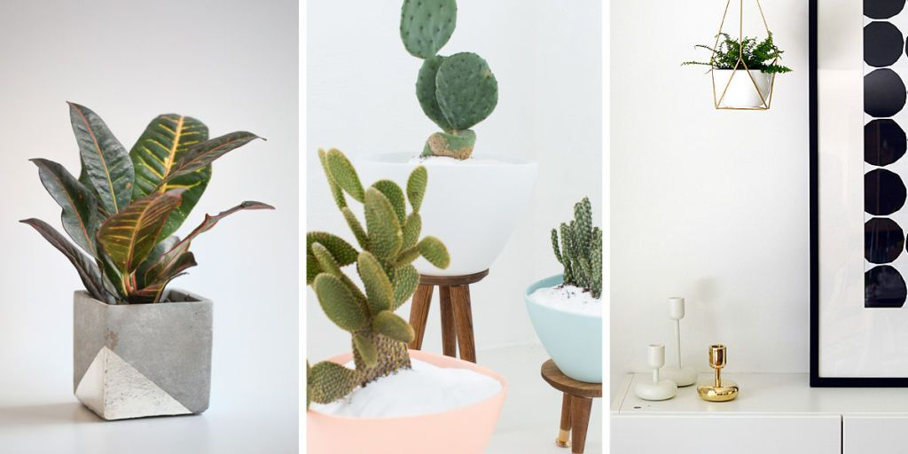 3 different types of plants in a household setting