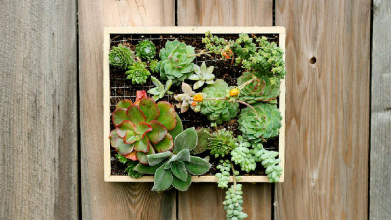 st. patrick's day wall planter