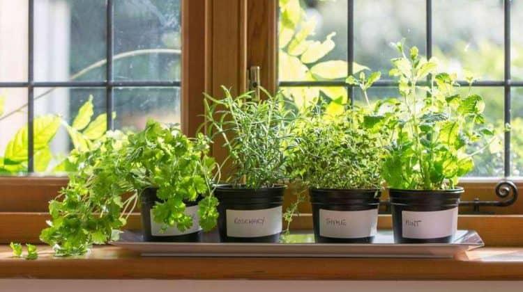 different herbs in a homemade herb garden