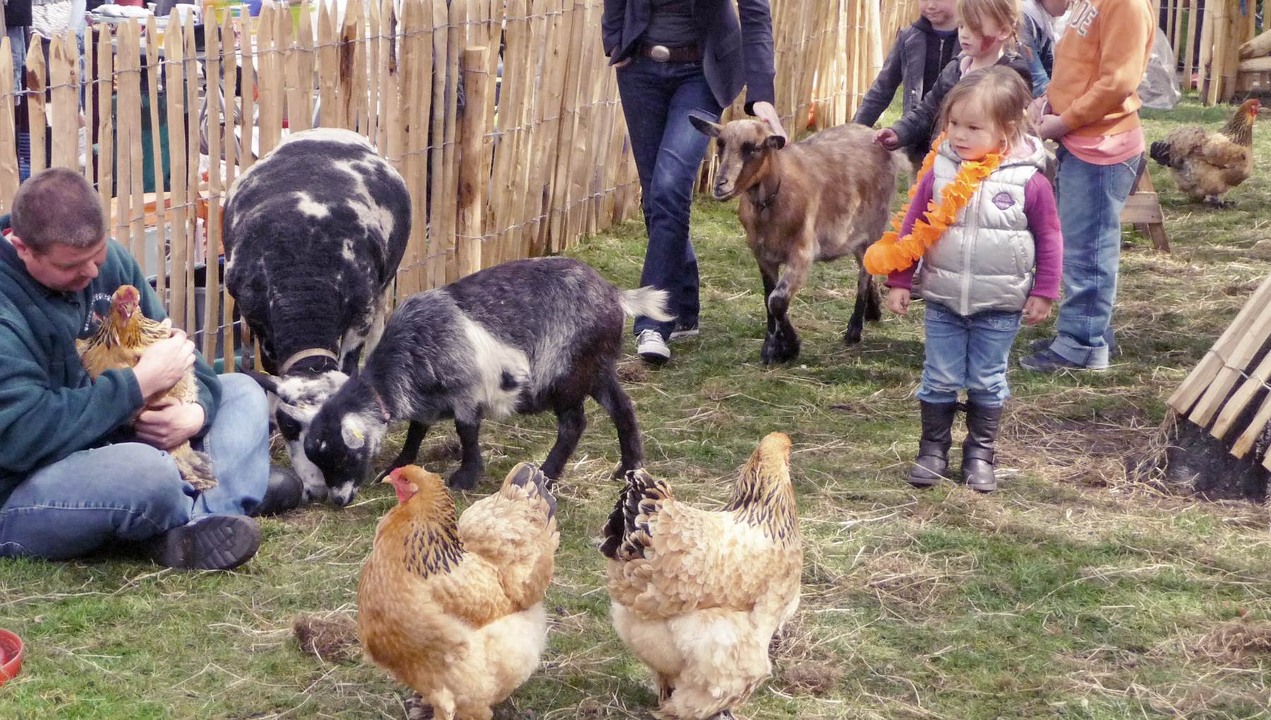 a petting zoo with chickens goats and children