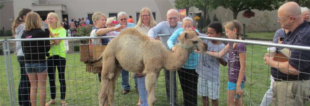 camel in a petting zoo