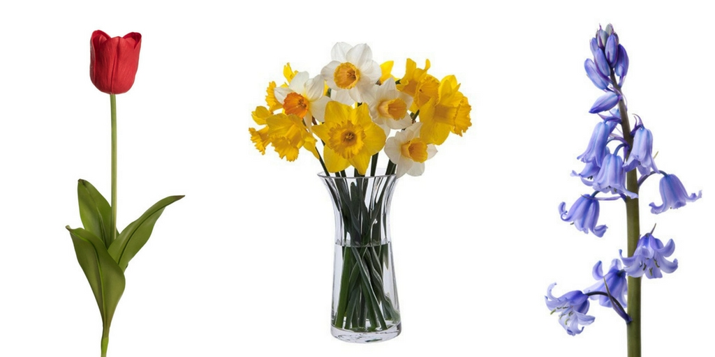 different types of spring flowers