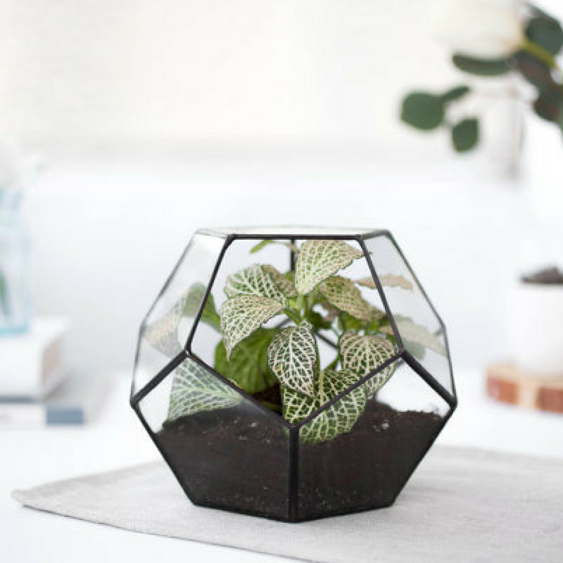 Geometric Patterns Glass Planters Terrariums