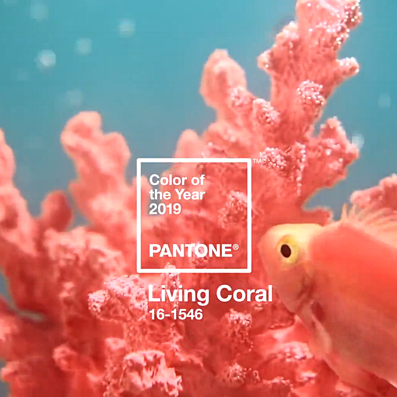 Living Coral | Feature Image
