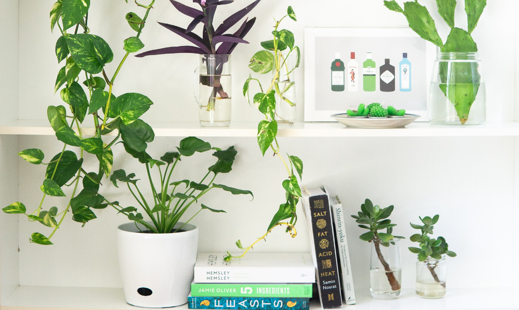 Eco-Friendly Home with House Plants On Shelves