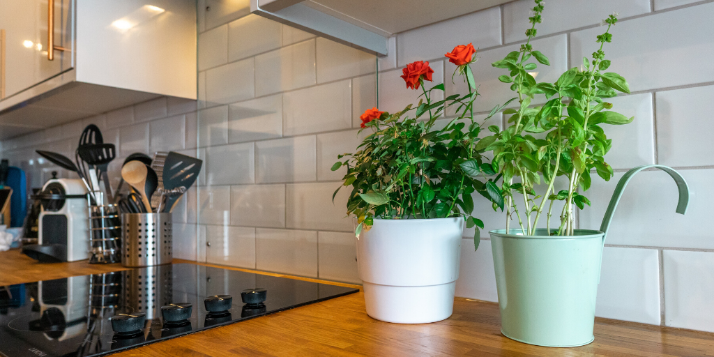 Plants on Kitchen Surface in an eco-friendly home