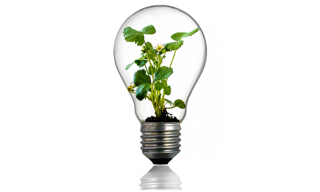 conclusion header photo of bulb with plant