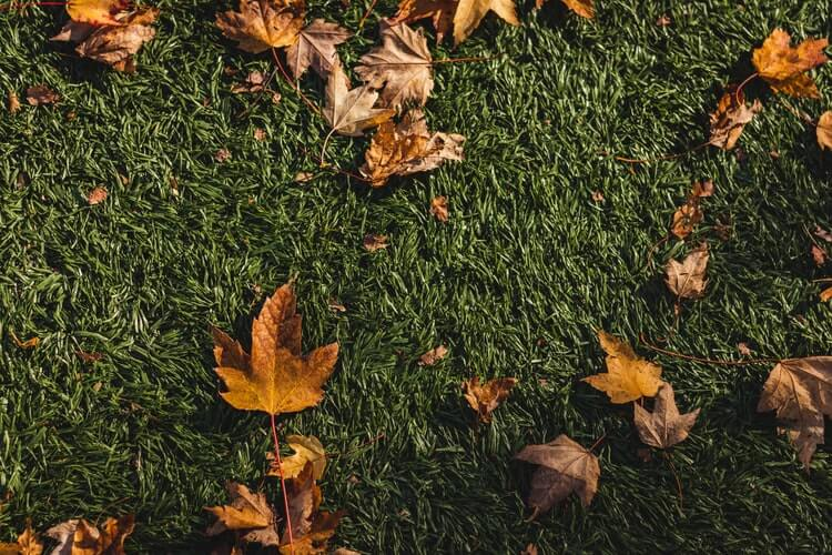 a close up image of grass with leafs and debris littering it