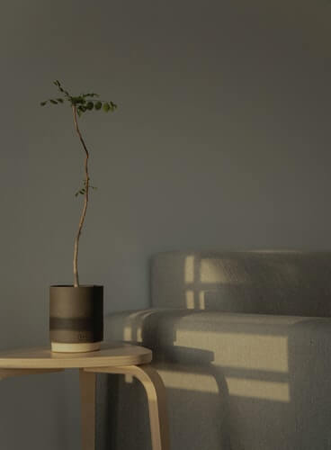 a japandi style interior corner with minimal chair and bonsai tree on a pine wood table