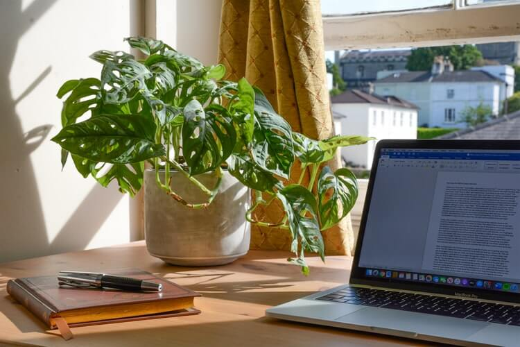 a cheese plant on a wooden desk in front of a window with a laptop and notepad next to it